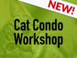 Cat Condo workshop blog image